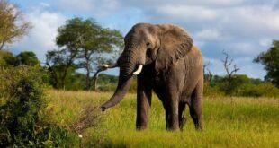 Fillerin özellikleri, nerede yaşarlar ve ne yerler